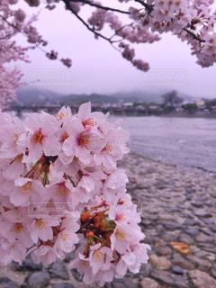 春 - No.423025