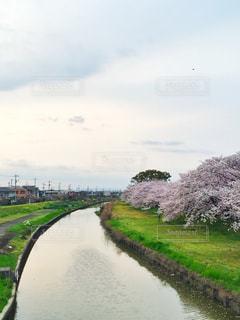 春 - No.424920
