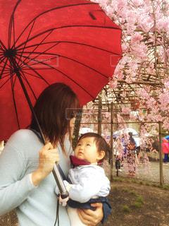 桜,清水寺,傘,屋外,京都,人物,ママと子供