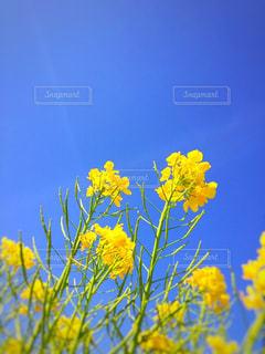 黄色の花 - No.1135286