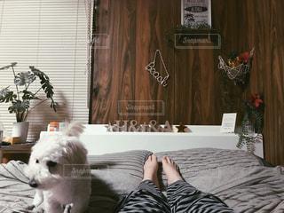 犬,インテリア,コンテスト