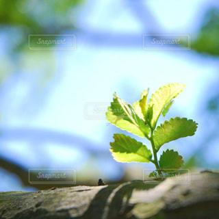 木の写真・画像素材[453101]