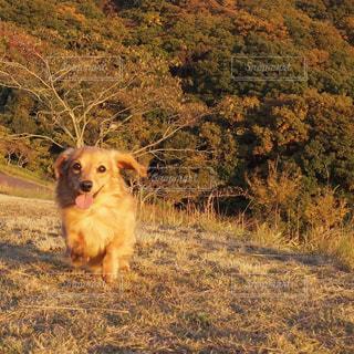 犬 - No.463716