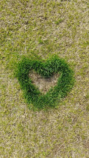 春,芝生,緑,ハート,グリーン,新芽,芽吹き