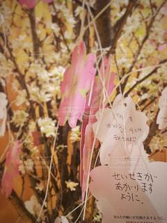 桜 - No.361853