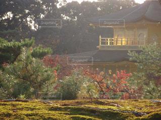 金閣寺の写真・画像素材[793977]