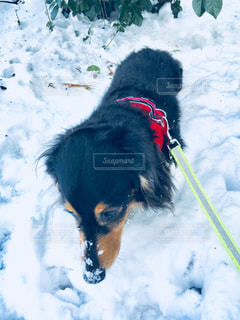 雪遊びの写真・画像素材[1005392]