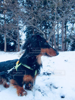 雪遊びの写真・画像素材[1005437]