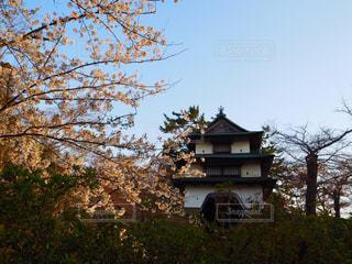 桜の写真・画像素材[1154199]