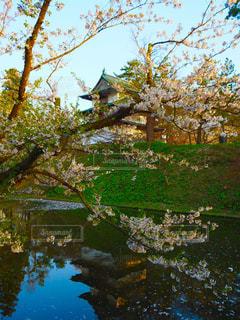 桜の写真・画像素材[1154203]
