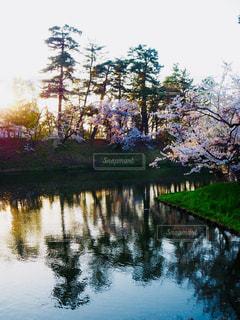 木々 に囲まれた水の体の写真・画像素材[1154204]