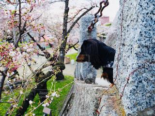 桜の写真・画像素材[1154244]