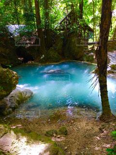 水の体の横にあるツリーの写真・画像素材[1324083]