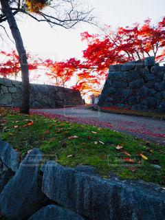 石垣と紅葉の写真・画像素材[1619143]