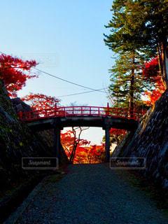 廊下橋と紅葉の写真・画像素材[1619149]