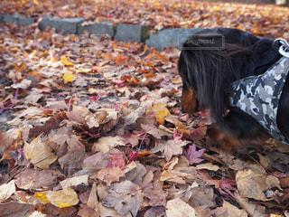秋の散歩の写真・画像素材[1619221]