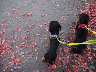 秋の散歩の写真・画像素材[1621591]