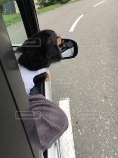 道路の脇に座っている犬の写真・画像素材[2711852]