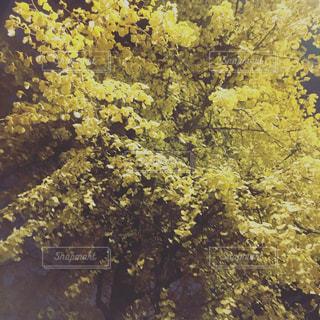 秋の写真・画像素材[602308]