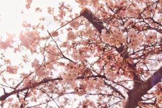 花の写真・画像素材[410523]