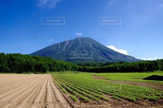 背景の山のフィールドの写真・画像素材[880539]