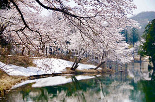 春の訪れと冬の名残との写真・画像素材[1411157]