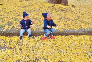 落ち葉ではしゃぐ子ども達の写真・画像素材[1653284]