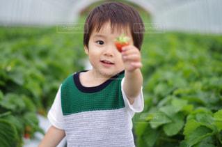 草の中に立っている小さな男の子の写真・画像素材[1786568]