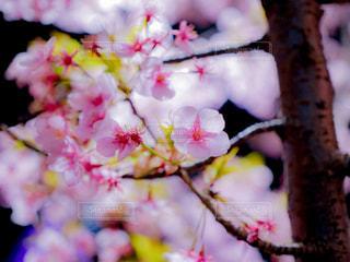 春 - No.410093