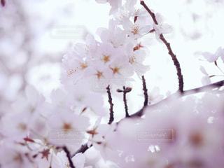 春 - No.420865