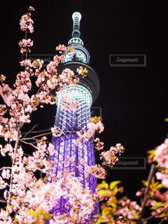 No.573879 桜