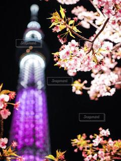 桜 - No.573880