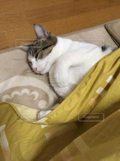 毛布の上で眠っている猫の写真・画像素材[1632790]