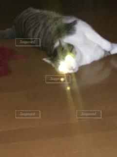 猫,動物,ペット,人物,ネコ,目からビーム,目が光ってる,床にねこるんでる