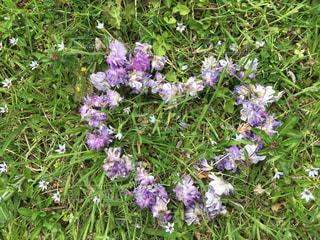緑と紫の写真・画像素材[1149897]