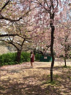 桜の中に佇む赤い服の女の子の写真・画像素材[448912]