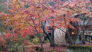 森の大きな木の写真・画像素材[892468]