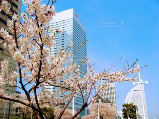 春の写真・画像素材[419591]