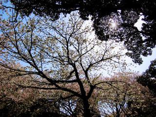 春の写真・画像素材[419595]
