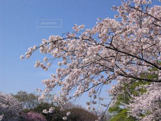 春 - No.419596