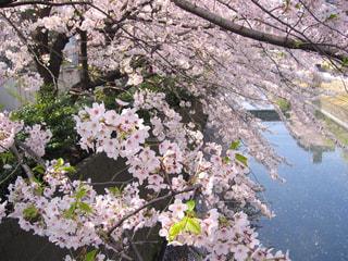 春の写真・画像素材[419597]