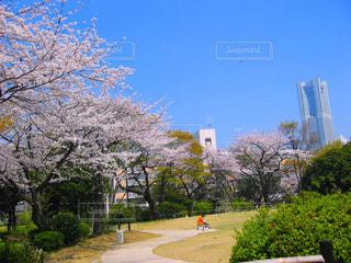 春 - No.419601
