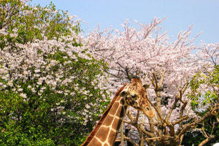 春の写真・画像素材[419602]