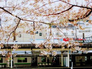 春の写真・画像素材[419604]