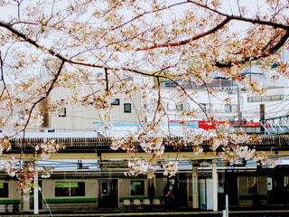 春 - No.419604