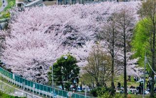 春 - No.419606
