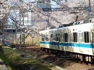 春の写真・画像素材[419610]