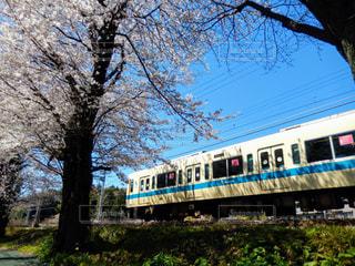 春の写真・画像素材[419611]
