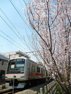 春 - No.419612
