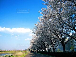 春の写真・画像素材[423489]